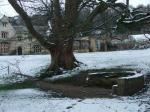 Large tree in college grounds and water spring