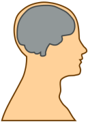 Silhouette of a brain in a head side profile