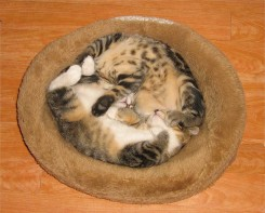 Two kittens curled up together
