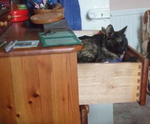 Cat asleep in dressing table drawer