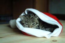 Cat in a Father Christmas hat