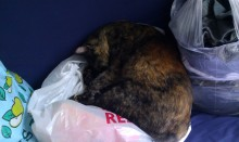 Cat sleeping on bags