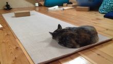 Cat on yoga mat