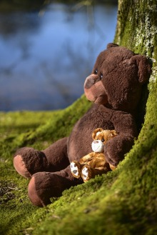 Teddy bears leaning against a tree