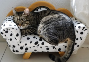 Cat asleep in a small bed
