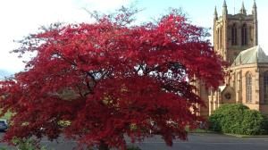 Red leaves on tree with church in background